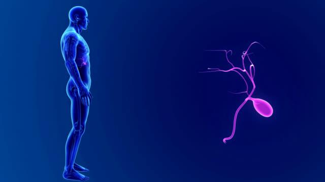 Gallbladder zoom with Skeleton video