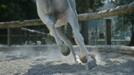 SLO MO DS Gallop of a white horse in the longe video