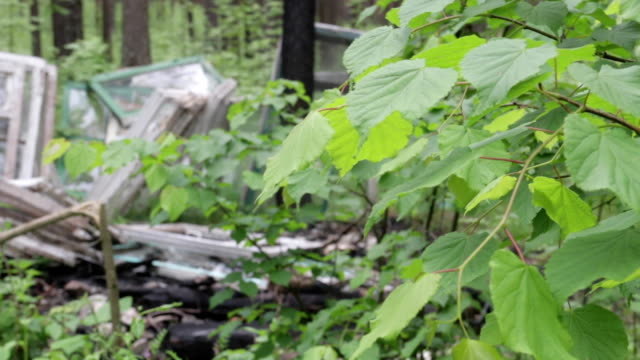 Garbage dump in the forest, environmental pollution, sunny summer day, forest, beautiful green trees. video