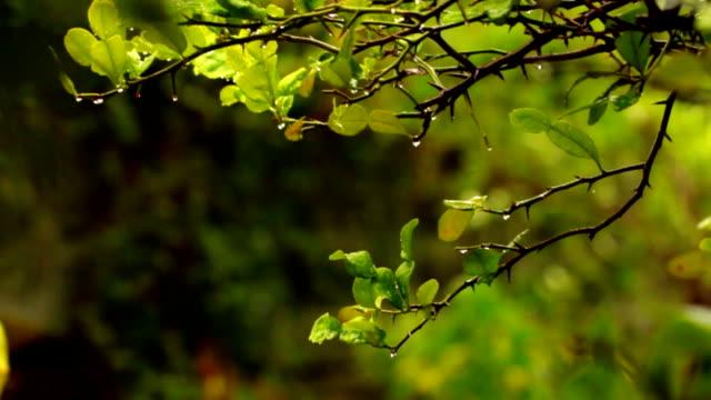 garden after rain drop video