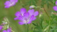 Garden Flowers video