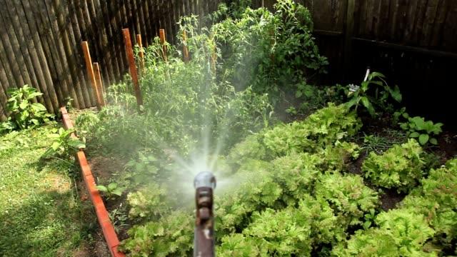 Garden Hose Spraying Organic Vegetables video