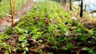 Garden hose water spraying on organic vegetables video