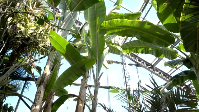 garden in greenhouse video