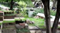 Garden of Bonsai trees video