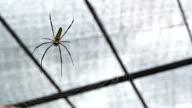 garden spider video