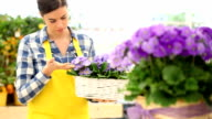 garden spring time concept, woman florist working primula flowers video
