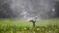 Garden sprinkler watering grass video
