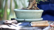 garden tools on the bonsai pots ,AF point selection video