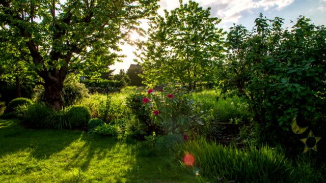 CRANE UP: Garden video