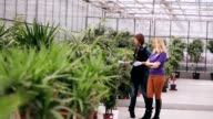 Gardener advises client in the plants selection video
