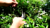 Gardener cutting branch of tree with Pruning shears video