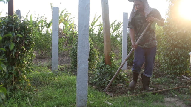 Gardener Cutting Grass in His Yard video