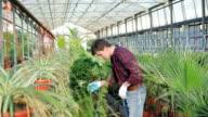 Gardener examining flowerpots in gardenhouse FullHD video