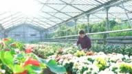 Gardener examining flowers in gardenhouse FullHD video