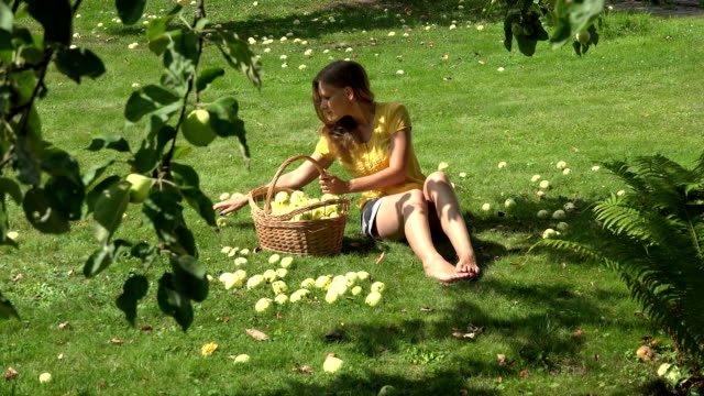 Gardener girl sitting on ground and gathering windfall ripe apples fruits. FullHD video