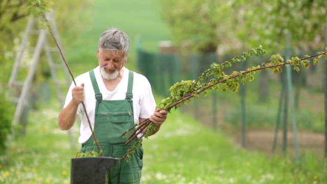Gardener grinding branches of trees video