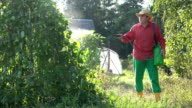 Gardener guy spray pesticide on beans legume vegetable plants. video