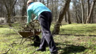 gardener load dry branches in old rural wheelbarrow in backyard. video