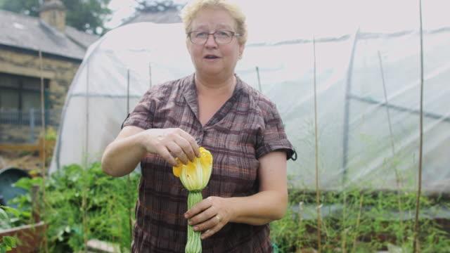 Gardener Looking at Courgette Flower video