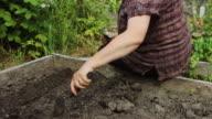Gardener Making Furrow for Seeds video