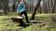 Gardener man load barrow with fruit tree branches and carry. video