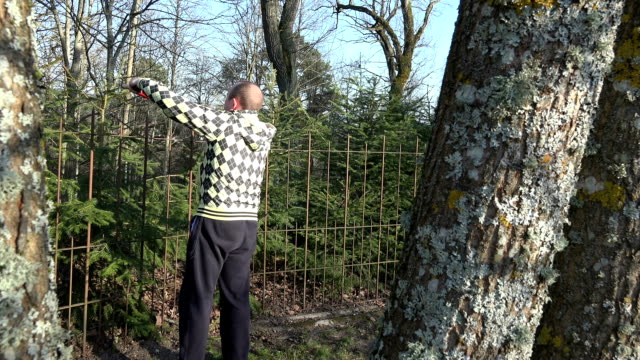 Gardener man trim fir tree hedge with clippers. video