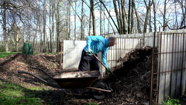 gardener man with pitchfork dig compost humus to barrow. video