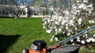 Gardener mow lawn. Spring blooms in garden video