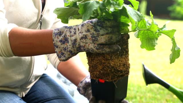 Gardener Places Gerbera Flower in Basket video