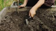 Gardener Planting Seeds video