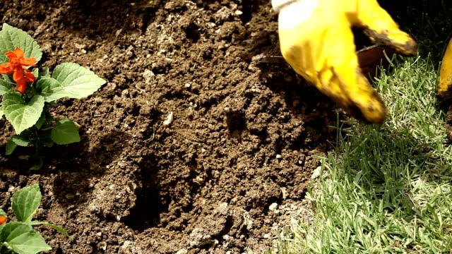 Gardener Planting The Flower in Spring video