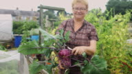 Gardener Posing with Freshly-Picked Kohlrabi video