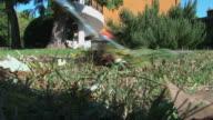 Gardener raking meadow of the garden, close-up video