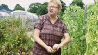 Gardener Sampling Peas video