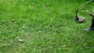 Gardener trimming grass video