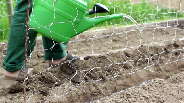Gardener watering a seedbed video