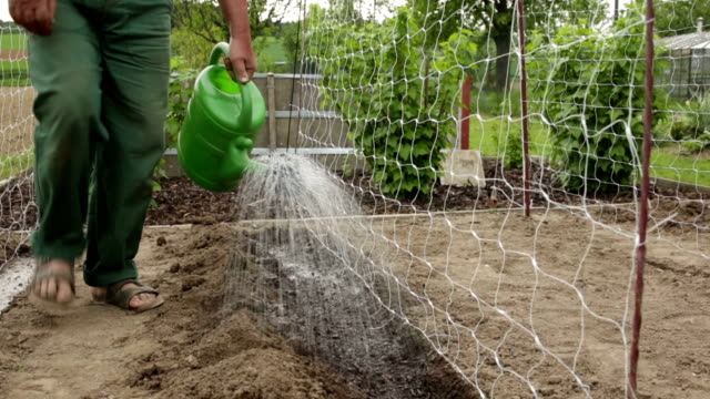 Gardener watering a seedbed with a watering can video