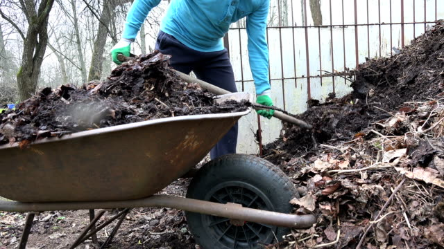 gardener with pitch fork load rotten compost humus to barrow video