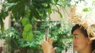 gardener woman picking up a fresh mango from tree video