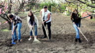 Gardening. The company of young people working in the garden. Series video