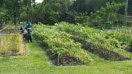Gardening video