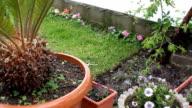 Gardening, Watering Plants, HD 1080 video