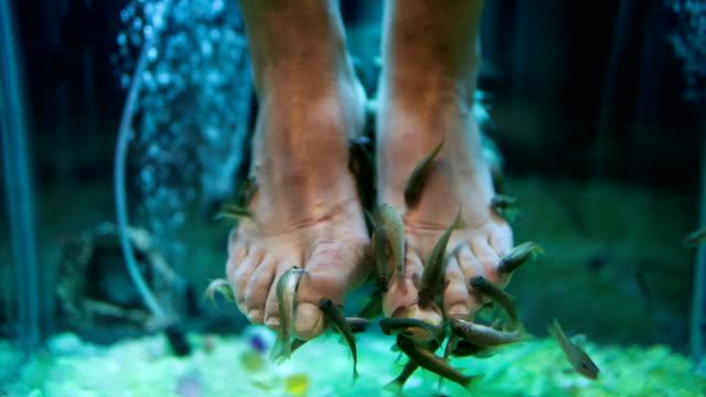 Garra Rufa fish pedicure video