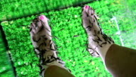 Garra Rufa fishes cleans epidermis from feet video