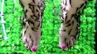 Garra Rufa fishes cleans epidermis from woman feet video