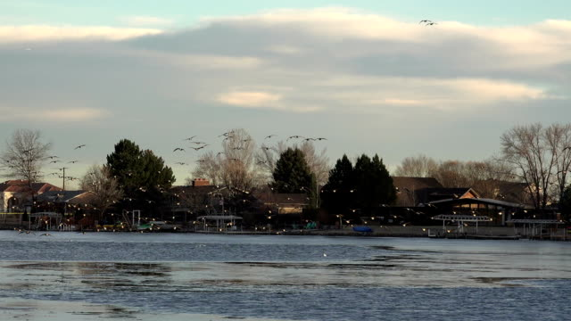 Geese Landing All At Once Shot video