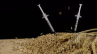 HD SUPER SLOW-MO: Genetically Modified Wheat video