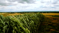 german fields with stormy weather video
