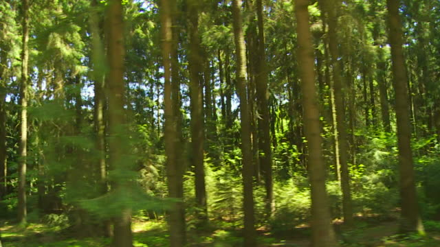 German Mixed Forest Tracking Shot video
